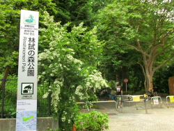 林試の森公園入口 下目黒散策1