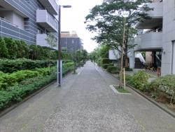 内川跡1 臼田坂散策1