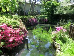 深沢の杜緑地 池 桜新町・深沢散策4