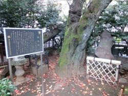 騎馬塚 渋谷川上流散策3