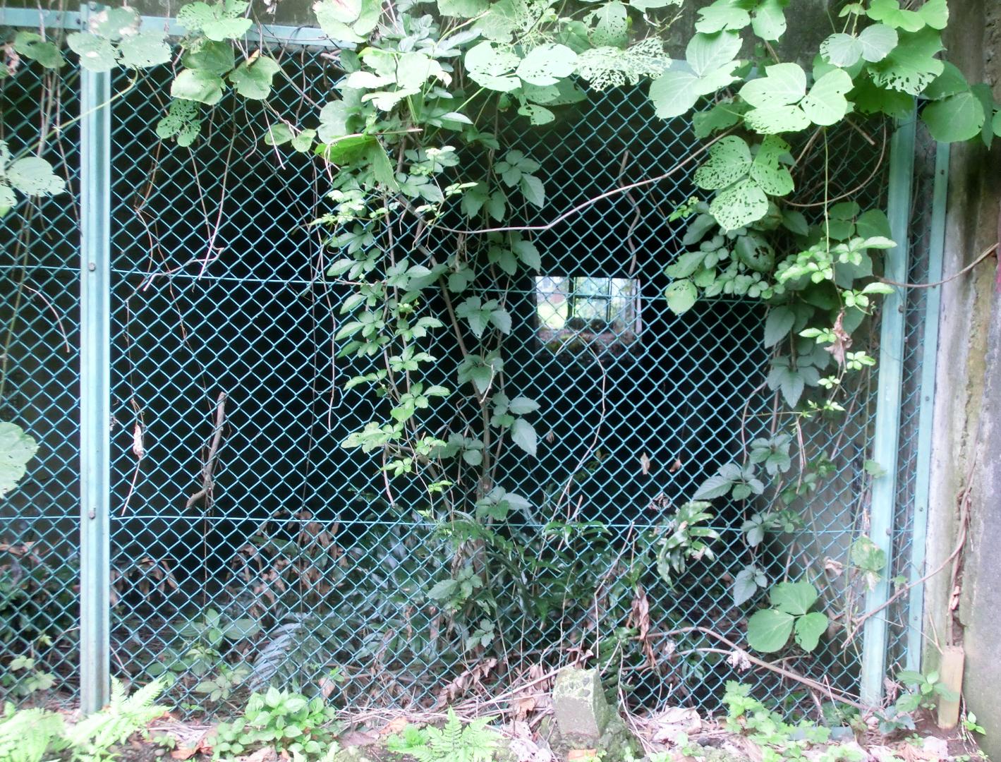内川跡3 臼田坂散策2