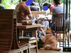 犬 ミスターファーマー記事