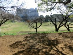 東大グラウンド 三田用水散策3