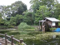 松濤公園の池 三田用水跡散策3
