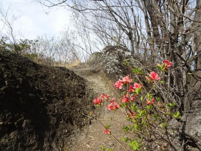 ヤマツツジも咲き出した姫天狗