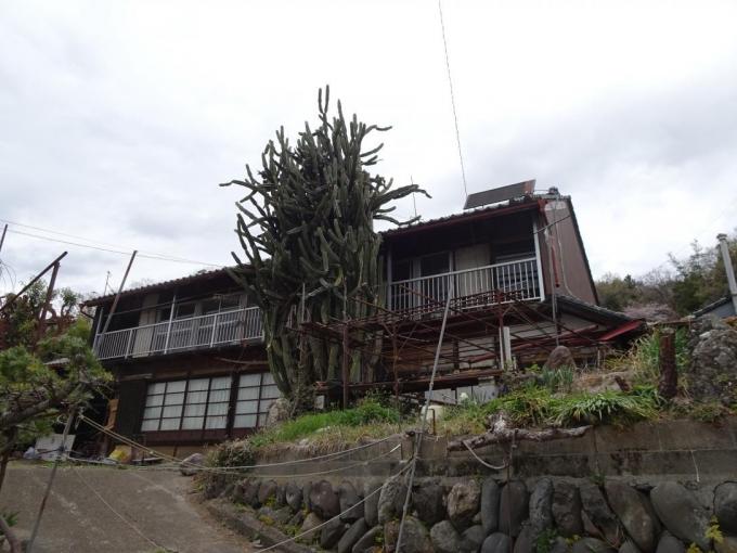 大サボテンの家