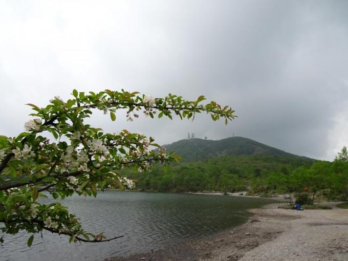 湖畔のズミと地蔵岳