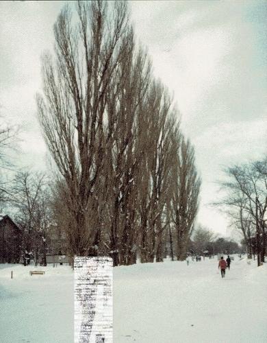 北大 メインストリート ポプラ 1982年2月-1