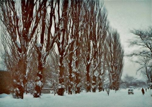 北大 メインストリート ポプラ 1982年2月-2