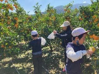 子供達各々ミカン収穫