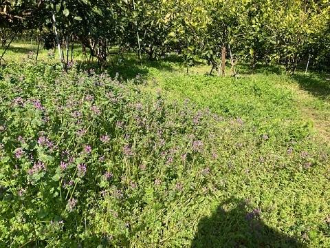 草刈り前草 (2)