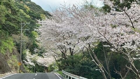 桜空の公園