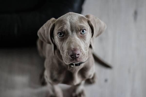 dog_20210226192622cef.jpeg
