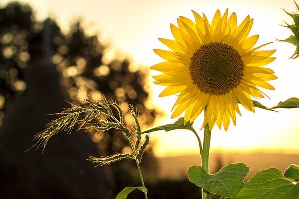 sun_202008132039311cc.jpg
