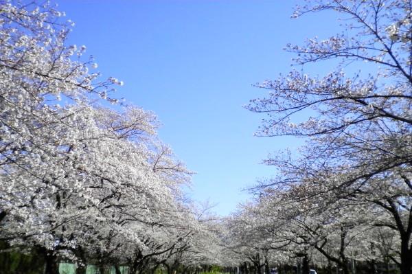 花ブ20200325-4