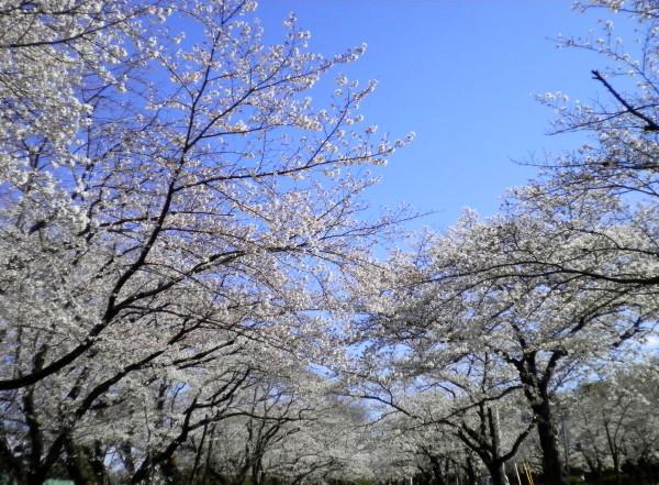 花ブ20200325-6