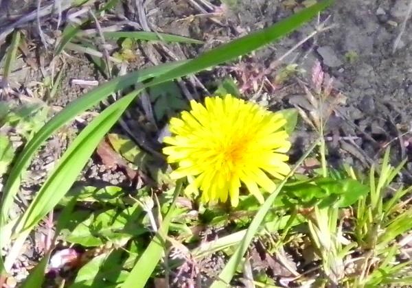 花ブ20200325-10