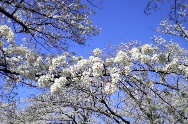 花ブ20200325-14