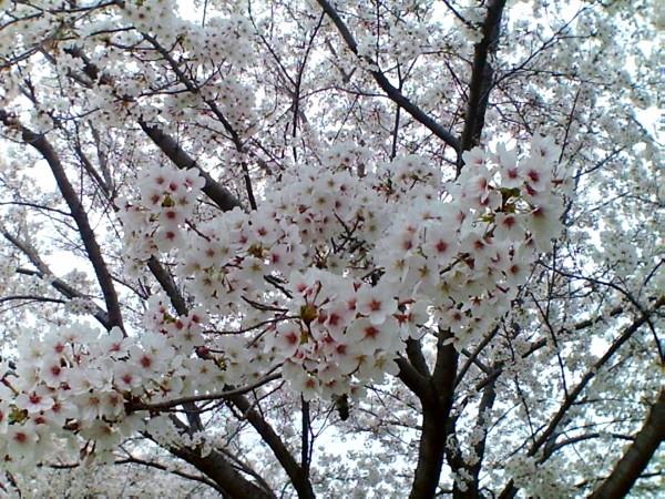 花ブ20200329-10