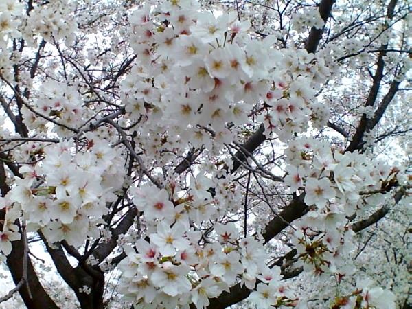 花ブ20200329-12