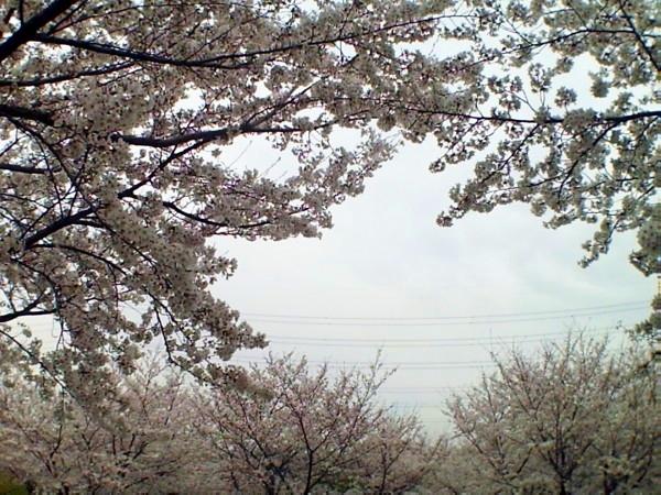 花ブ20200329-15