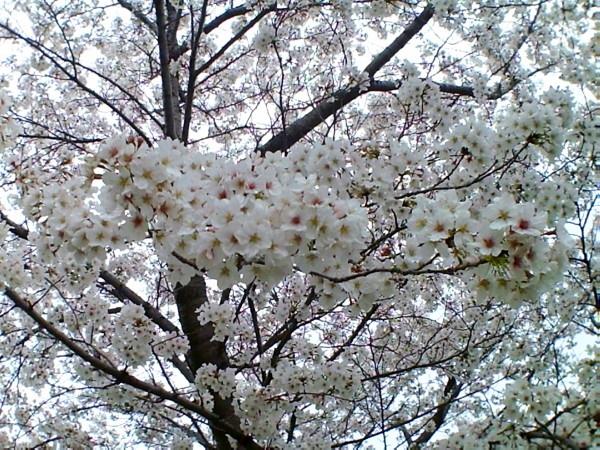 花ブ20200329-18