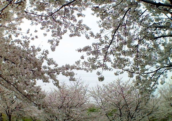 花ブ20200329-19