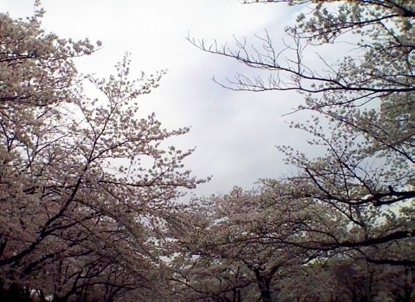 花ブ20200330-2