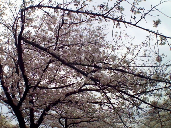 花ブ20200330-3