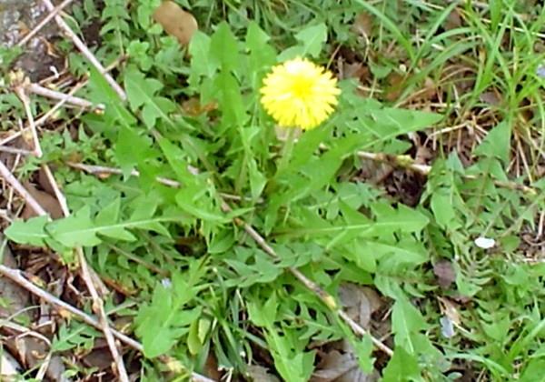 花ブ20200330-6