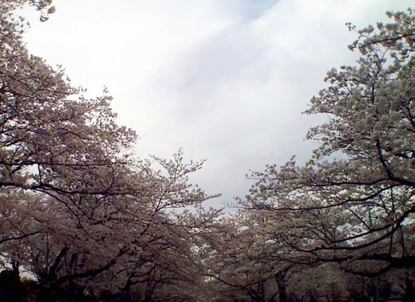 花ブ20200330-10