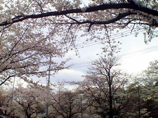 花ブ20200330-12