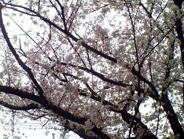 花ブ20200330-13