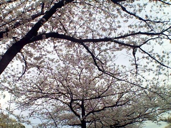 花ブ20200330-14