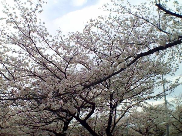 花ブ20200331-3