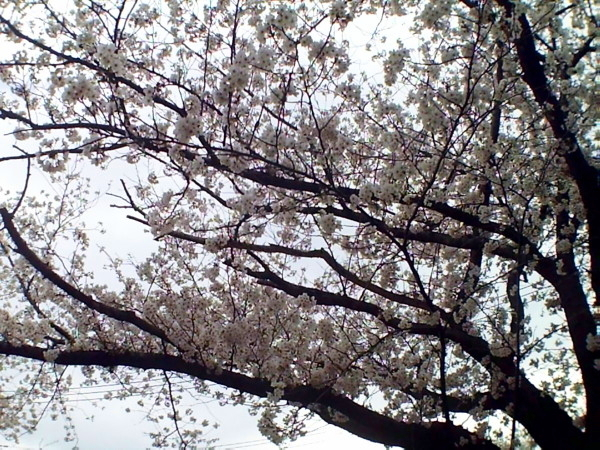 花ブ20200331-4