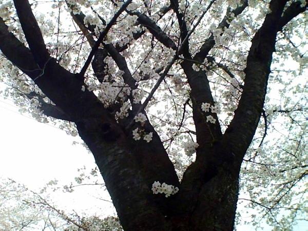 花ブ20200331-7
