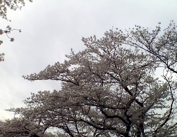 花ブ20200331-10
