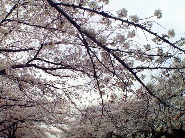 花ブ20200331-11