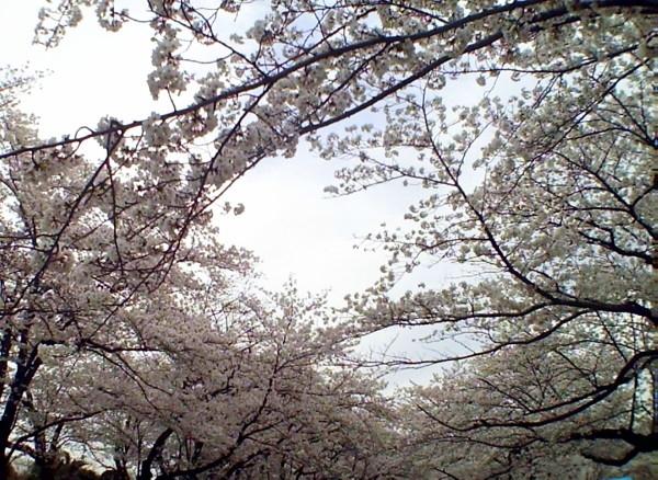 花ブ20200331-12