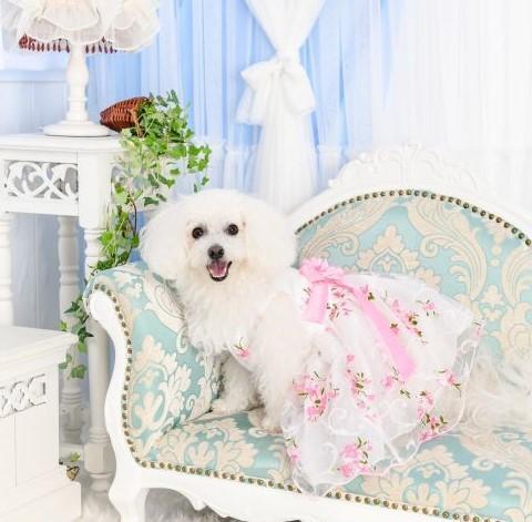 ララ 花柄ドレス202010