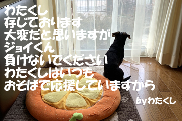 2019021302.jpg