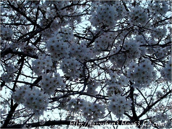 20080326-3.jpg