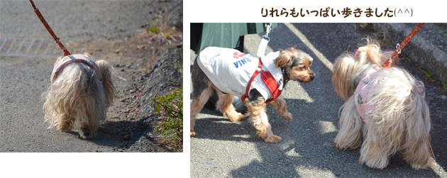 20200211河津桜祭り (6)