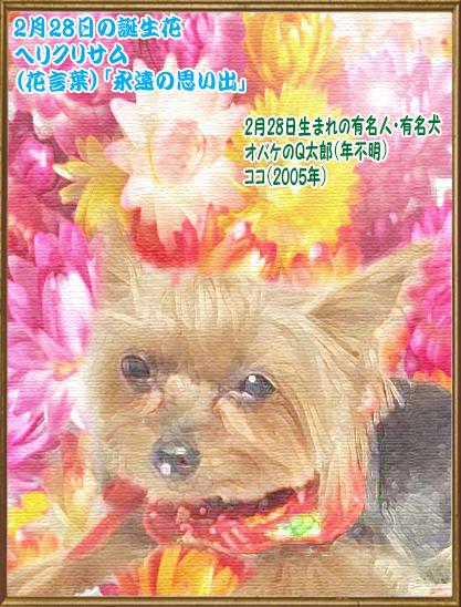 00誕生日 2020年02月28日ココちゃん(blog)15歳