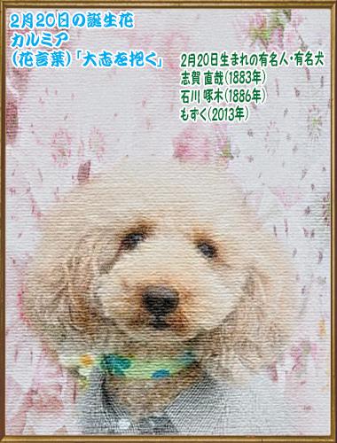 00誕生日 2020年02月20日もずくちゃん(blog)7歳