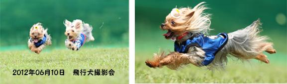 2012年06月10日飛行犬撮影会openingsize