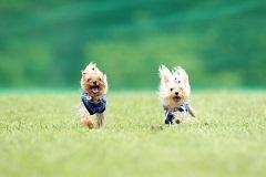2012年06月10日飛行犬撮影会 Wセレクトopeningsize