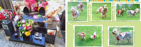 2012年07月15日お盆&お墓参り#18openingsize