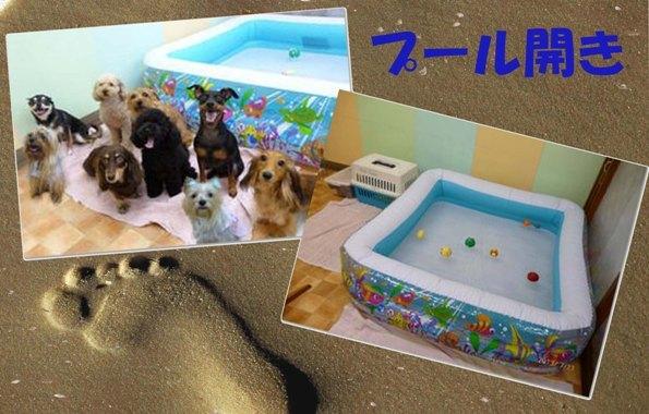 2013年08月11日幼稚園でプール開き
